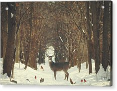 The Forest Of Snow White Acrylic Print by Carrie Ann Grippo-Pike
