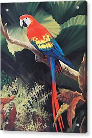 The Gossiper Acrylic Print by Laurie Hein