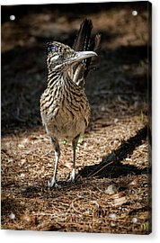 The Greater Roadrunner Walk  Acrylic Print by Saija Lehtonen