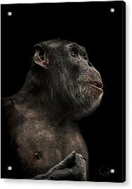 The Hitchhiker Acrylic Print by Paul Neville