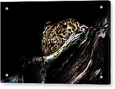 The Hunt Acrylic Print by Martin Newman