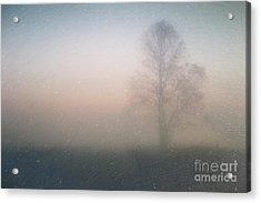 Acrylic Print featuring the photograph The Ice Tree by Joel Witmeyer