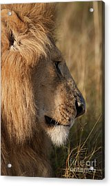 The King Acrylic Print by Stephen Smith
