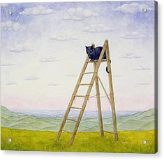 The Ladder Cat Acrylic Print by Ditz