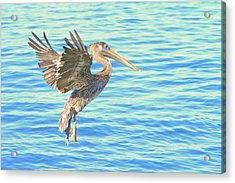 The Landing Acrylic Print by Shoal Hollingsworth