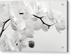 The Last Orchid Acrylic Print by Wim Lanclus