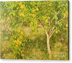 The Lemon Tree Acrylic Print by Henry Scott Tuke
