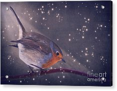 The Little Robin At The Night Acrylic Print by Angela Doelling AD DESIGN Photo and PhotoArt