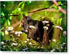 The Little Things Acrylic Print by Lois Bryan