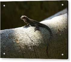 The Lone Lizard Acrylic Print by Amanda Vouglas