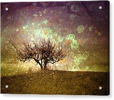 The Lone Tree Acrylic Print by Tara Turner