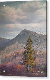 The Lonesome Pine Acrylic Print by Sean Conlon