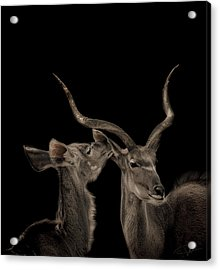 The Lovers Acrylic Print by Paul Neville