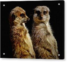 The Meerkats Acrylic Print by Ernie Echols