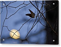 The Moon And The Monarch Acrylic Print by Jeff Rose