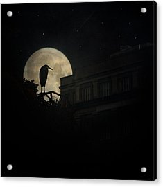 The Night Of The Heron Acrylic Print by Chris Lord