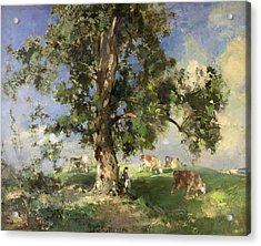 The Old Ash Tree Acrylic Print by Edward Arthur Walton