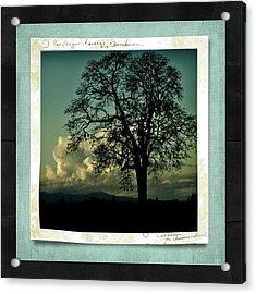 The Old Oak Acrylic Print by Bonnie Bruno