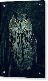 The Owl Acrylic Print by Carlos Caetano