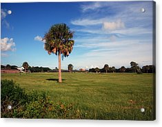 The Palmetto Tree Acrylic Print by Susanne Van Hulst
