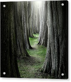 The Pathway Acrylic Print by Ian David Soar
