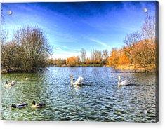 The Peaceful Swan Lake Acrylic Print by David Pyatt