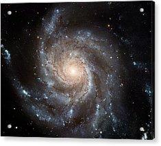The Pinwheel Galaxy  Acrylic Print by Hubble Space Telescope