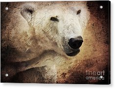 The Polar Bear Acrylic Print by Angela Doelling AD DESIGN Photo and PhotoArt