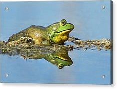 The Pond King Acrylic Print by Mircea Costina Photography