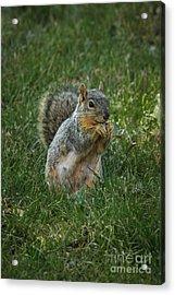 The Praying Squirrel Acrylic Print by Robert Bales