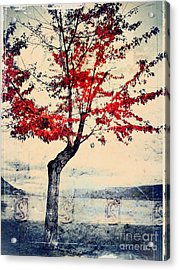 The Red Tree At Okanagan Lake Acrylic Print by Tara Turner
