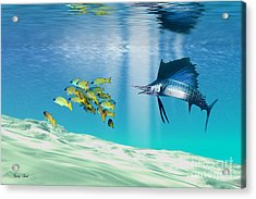 The Reef Acrylic Print by Corey Ford