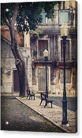 The Resting Place  Acrylic Print by Carol Japp