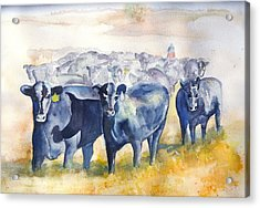 The Round Up Cattle Drive  Acrylic Print by Sharon Mick