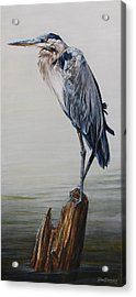 The Sentinel - Portrait Of A Great Blue Heron Acrylic Print by Rob Dreyer AFC
