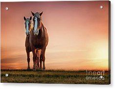 The Stallion And The Mare Acrylic Print by Tamyra Ayles