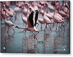 The Take Off Acrylic Print by Stephen Smith