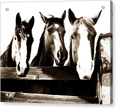 The Three Amigos In Sepia Acrylic Print by Steve Shockley