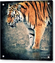 The Tiger Acrylic Print by Angela Doelling AD DESIGN Photo and PhotoArt