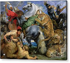 The Tiger Hunt Acrylic Print by Rubens