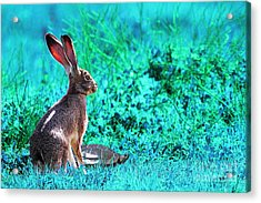 The Tortoise And The Hare . Cyan Acrylic Print by Wingsdomain Art and Photography