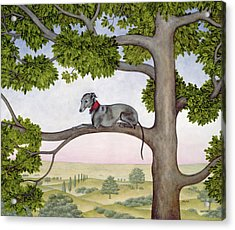 The Tree Whippet Acrylic Print by Ditz