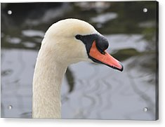 The Ugly Duckling Acrylic Print by Richard Andrews
