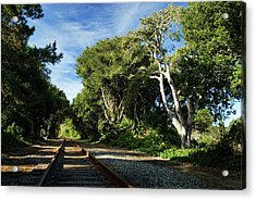 The Way Acrylic Print by Wayne Stadler