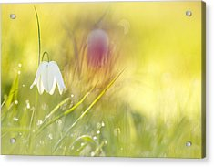 The White Queen Acrylic Print by Roeselien Raimond