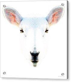 The White Sheep By Sharon Cummings Acrylic Print by Sharon Cummings
