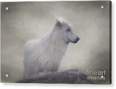 The White Wolf. Acrylic Print by Robert Brown