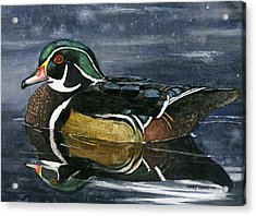 The Wood Duck Acrylic Print by Mary Tuomi