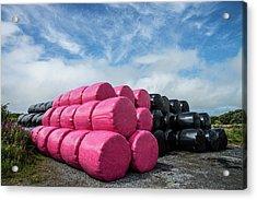 Think Pink Acrylic Print by Martina Fagan