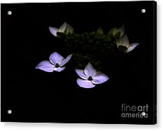 This Little Light Of Mine Acrylic Print by Amanda Barcon